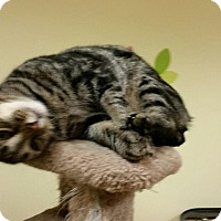 Adopt A Pet :: Keanu - Maryville, TN