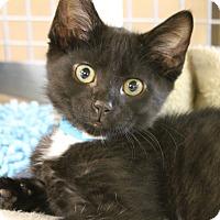 Adopt A Pet :: Clove - Medina, OH