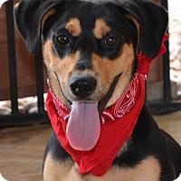 Adopt A Pet :: THOMAS - Liverpool, TX