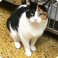 Adopt A Pet :: Ivy - Toledo, OH