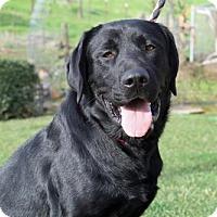 Adopt A Pet :: Ulysses - Clovis, CA