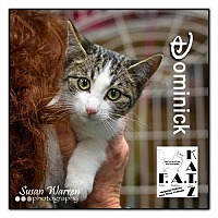 Adopt A Pet :: Dominick - Albuquerque, NM