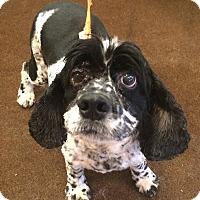 Adopt A Pet :: Happy Hubert - Oak Ridge, NJ