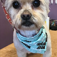 Adopt A Pet :: Sweetie Pie - Lincolnwood, IL