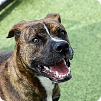 Adopt A Pet :: Herbie 223-17 - Cumming, GA