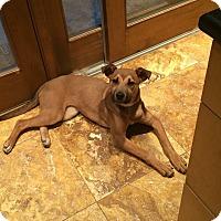 Adopt A Pet :: Leah - Chesterfield, VA