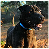 Adopt A Pet :: Penn - Forked River, NJ