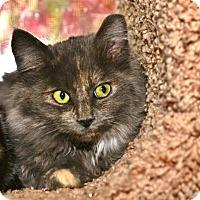 Adopt A Pet :: Willow - Davis, CA