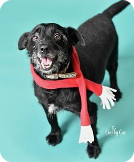 Terrier (Unknown Type, Small) Mix Dog for adoption in Philadelphia, Pennsylvania - Bruce