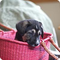 Adopt A Pet :: Paradox - Evergreen, CO