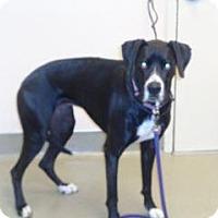 Adopt A Pet :: Jasmine - Wildomar, CA