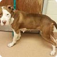 Adopt A Pet :: mamacita 1919 - Columbus, GA
