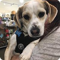 Adopt A Pet :: Nancy - Gig Harbor, WA