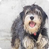 Adopt A Pet :: Ezra - Los Angeles, CA