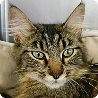 Adopt A Pet :: Pheobe - Springdale, AR