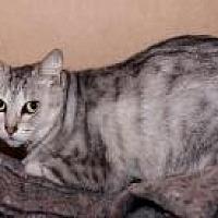 Adopt A Pet :: Candi - BROOKSVILLE, FL