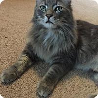 Adopt A Pet :: Alastor - Rochester Hills, MI