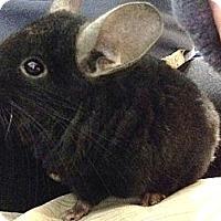 Adopt A Pet :: Didi Jr - Granby, CT