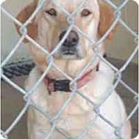 Adopt A Pet :: Lindsey - Cumming, GA