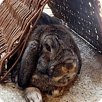 Adopt A Pet :: Boswell - Foster, RI
