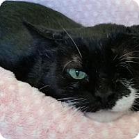 Adopt A Pet :: Stealthy - Alexandria, VA