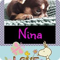 Adopt A Pet :: Nina - Anaheim, CA