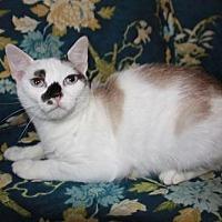 Adopt A Pet :: Mouse - Staunton, VA