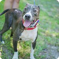 Adopt A Pet :: Macie - Tarboro, NC