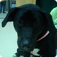 Adopt A Pet :: Raven - Winder, GA