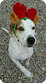Hound (Unknown Type) Mix Dog for adoption in Wilmington, Ohio - Stella