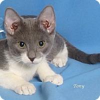 Adopt A Pet :: Tony - Kerrville, TX