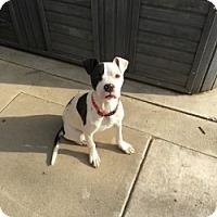 Adopt A Pet :: PIPER - Gustine, CA