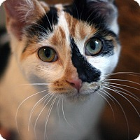 Adopt A Pet :: Clementine - Canoga Park, CA