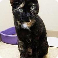 Adopt A Pet :: Jewel - Lincolnton, NC