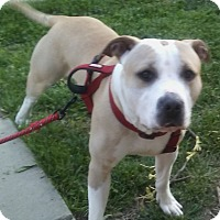 Adopt A Pet :: Tenpin (COURTESY POST) - Baltimore, MD