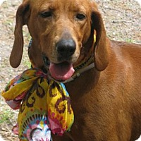 Hound (Unknown Type) Mix Dog for adoption in Voorhees, New Jersey - Kayla