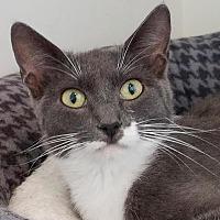 Adopt A Pet :: Porche - Colfax, IA