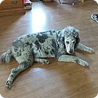 Adopt A Pet :: Toby-prison obedience trained - Hazard, KY
