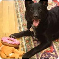 Adopt A Pet :: Layla - Windham, NH