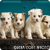 Adopt A Pet :: Our Gang Puppies! - Owensboro, KY