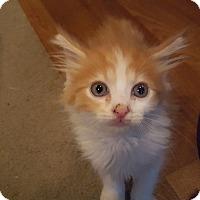 Adopt A Pet :: 1Jameson - Delmont, PA