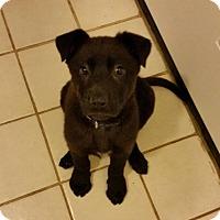Adopt A Pet :: Winnie - Pitt Meadows, BC