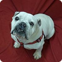 Adopt A Pet :: Lenny - Santa Ana, CA