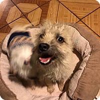 Adopt A Pet :: Claribel - San Diego, CA