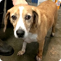 Adopt A Pet :: Bristol - Aurora, IL