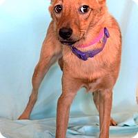 Adopt A Pet :: Jaya - Waldorf, MD