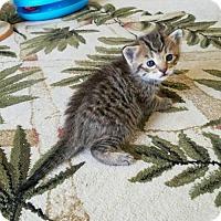Adopt A Pet :: Ralphie - Melbourne, FL