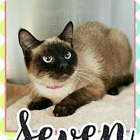Adopt A Pet :: Seven - Edwards AFB, CA