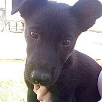 Adopt A Pet :: BENTLEY - Inglewood, CA