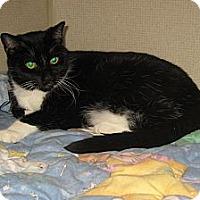 Adopt A Pet :: TABITHA - 2013 - Hamilton, NJ